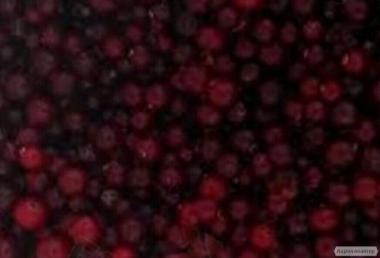 Выполним контракт на поставку замороженных ягод и грибов