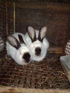 Продам кролики.
