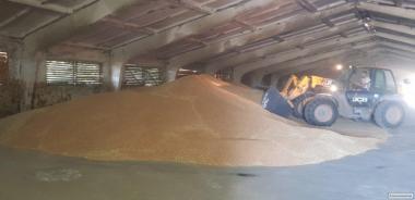 Продам пшеницю  1000
