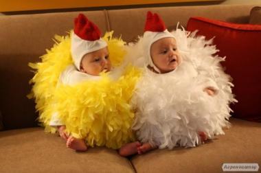 Яйцо инкубационное, цыплята Ломан Браун. Возможность опта.