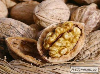 Продам целый бойный грецкий орех