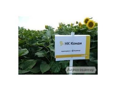 Семена подсолнечника НК Конди (Syngenta) 2016 г.у. импорт