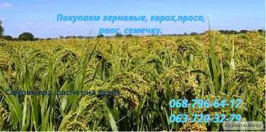 Покупаем ячмень, пшеницу нового урожая.