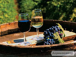 Продам вино молдавское !