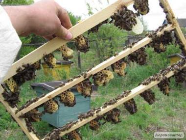 Продам бджоломатки