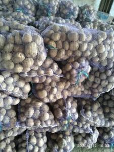 Картопля харчова