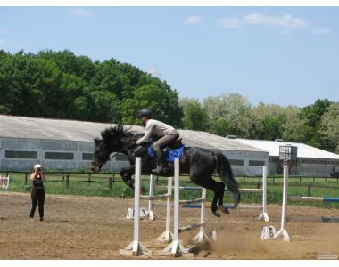 Продается спортивный конкурный конь, недорого