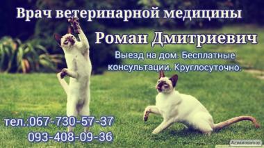 Кастрация котов 067-730-57-37, Стерилизация кошек О93-408-09-З6