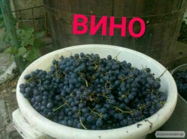 Вино домашні,натуральне з винограду,шипшина,вишня,абрикос..