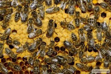 Продам пчелосемьи и пчелопакеты