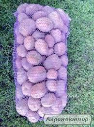 Продам хороший сорт картоплі недорого