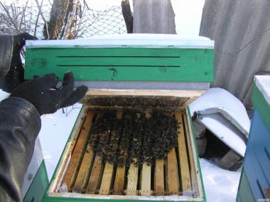Бессотовые бджолопакети і полурамочные бджолопакети (на піврамку)
