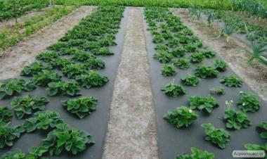 Агроволокно Черное, плотность 50, метраж