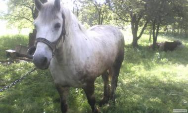 Продам лошадь.