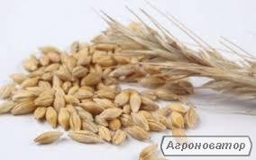 Продам пшеницу 6кл из состава