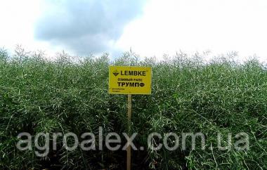 Триумпф насіння озимого ріпаку Lembke