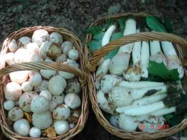 Настойка  гриба - весёлка обыкновенная