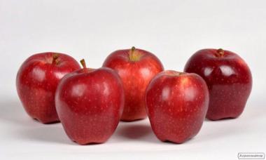 Продам саженцы яблони на подвое М9 и ММ106