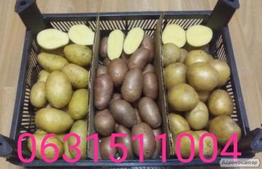 Картопля Гранада, Коннект, Ред Леді, Рів'єра і Ла-Перла ! Картопля