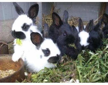 Продам кроликов не дорого