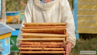 СУШЬ пчелинная на рамки 300.