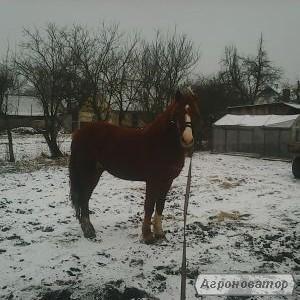 Продам кони