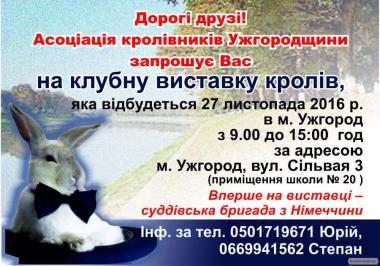 Клубна виставка кролів 2016 м.Ужгород