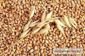 Покупаем ячмень, пшеницу, бобовые нового урожая.