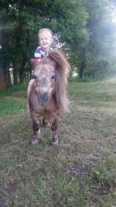 Продам пони породы шетландської