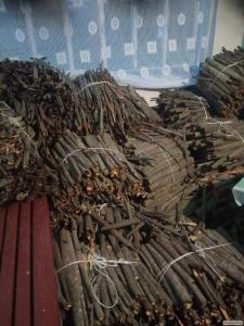 Продам кору крушины 32т листья березы 15т исландский мох 10т аир 6т