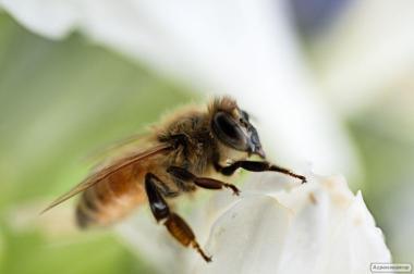 Пасека, пчелы, пчелосемьи, пасека, пчелы, пчелосемьи