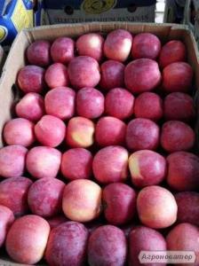 Яблока айдаред