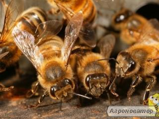 Бригада, продаст мед 2018 года.