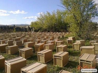 КАРНІКА! Продам пчелопакеты породы Карника, возможна пересылка поштою!