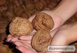Саженцы грецкого ореха сорт ИНТР