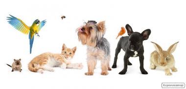 Виїзд ветеринара додому ,цілодобово Евтаназія тварин