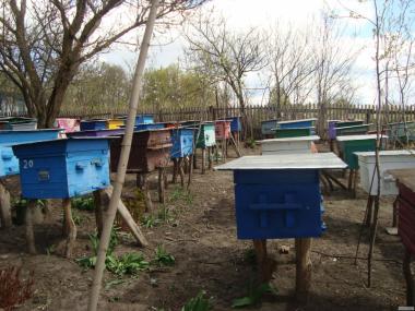 Продам 60 бджолопакетів (дадани)