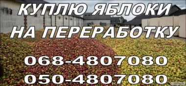 Куплю яблука оптом на переробку, (Харків Суми Полтава Донбас)