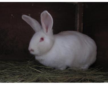 Продм кроликов