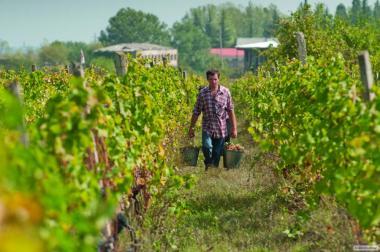 Домашние Бессарабские вина