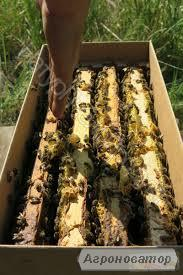 Реализую пчелопакеты по всей Украине