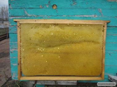 Продам Рамки сушь пчелиную