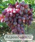 Продам саженці винограда