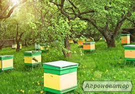 Продам пчелосемьи!