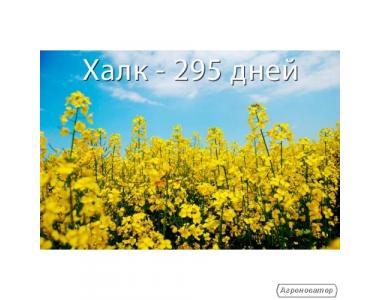 Семена рапса озимого Халк (ВНИС)