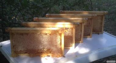 Мед квітковий (луговий)