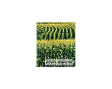 Насіння кукурудзи НС 2612 (Нові Сад, Сербія)