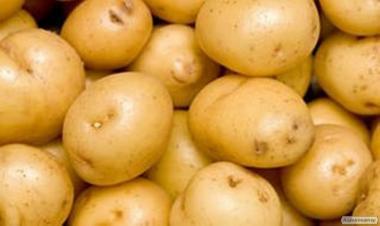 Продам элитные сорта картофеля
