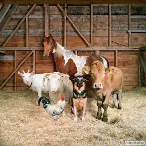 Продам 3 козы, очень ласковые,добрые