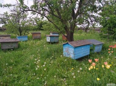 10 сильных пчелосемей в ульях полных меда